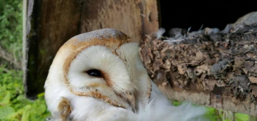 Barn Owl Course