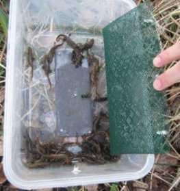 newt survey