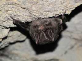 Bat Survey Newbury