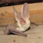 Bat Survey Wantage
