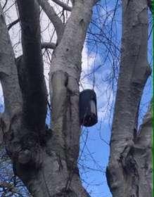Bat box on tree