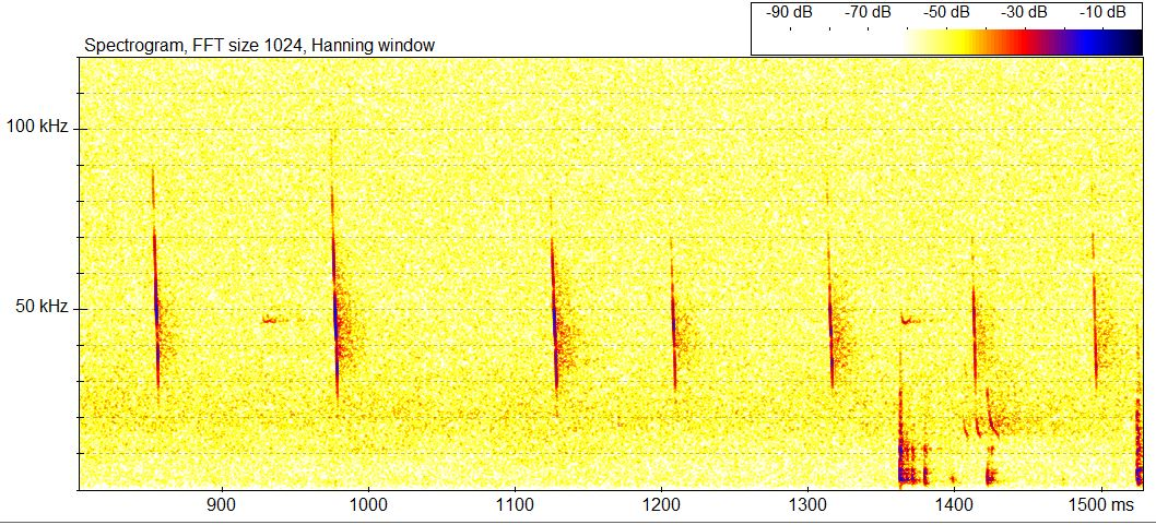 BatSound echolocation file