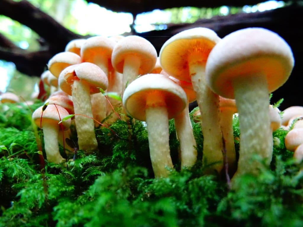 Extended Phase 1 Habitat Survey Bristol - fungi and moss