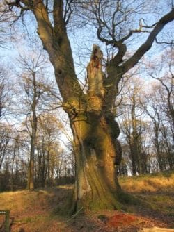Forest of Dean Ecology Survey