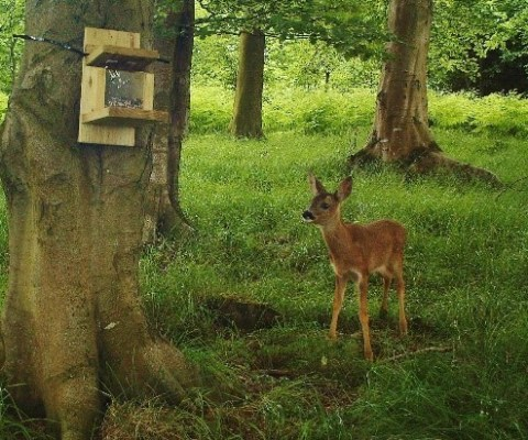 Deer recorded on camera trap during ecological survey
