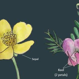 Plant Identification Course