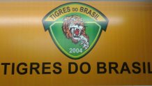 tigres2
