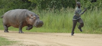 Hippo BJJ Austin