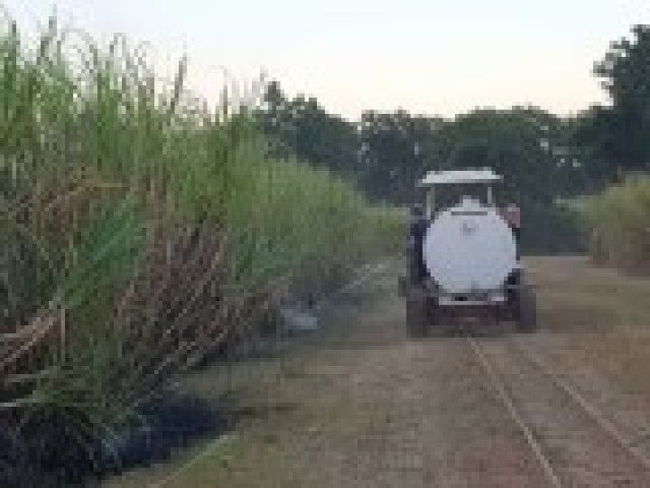 Sugar cane row with water truck beside it and a man spraying.