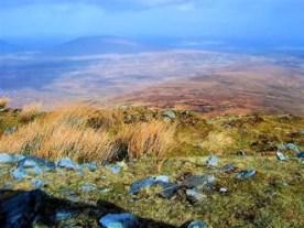 The Valley: bog road