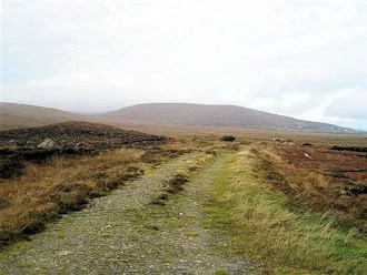 Bog road in the winter