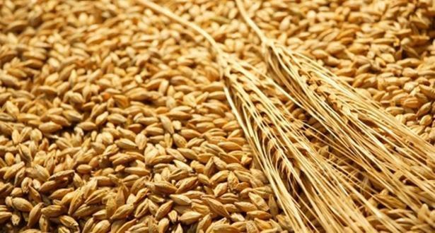 وزارة الفلاحة تحدد أسعار القمح وتقدم دعما للفلاحين