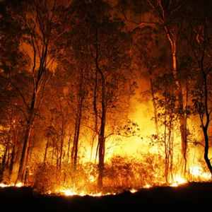 Achmea Australia assists bushfire impacted customers