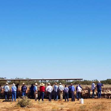 Achmea Australia supports the Marra Ewe Tour