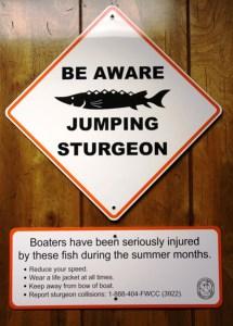 sturgeon signs
