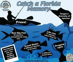 Florida Saltwater Angler Recognition infographic