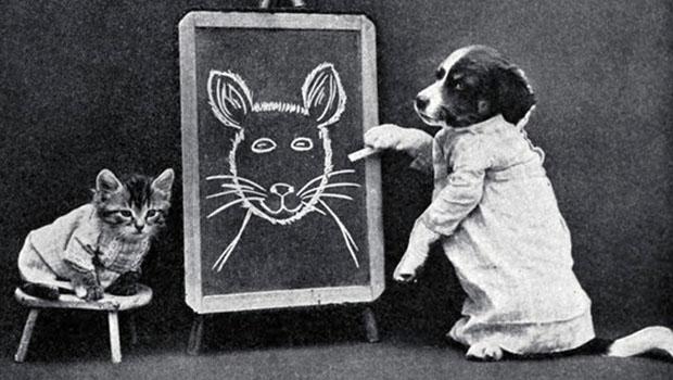 Fotos hilárias do primeiro meme de gato da história.