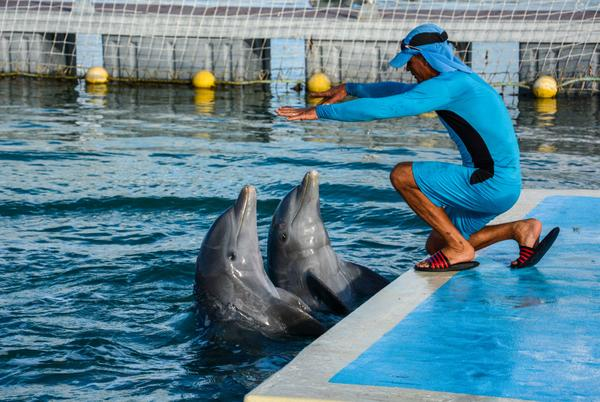 Función en el delfinario ubicado en el archipiélago Jardines del Rey, en Ciego de Ávila, Cuba, 11 de diciembre de 2017. ACN FOTO. Abel PADRON PADILLA