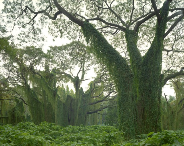 0825-bosque-cuba2.jpg