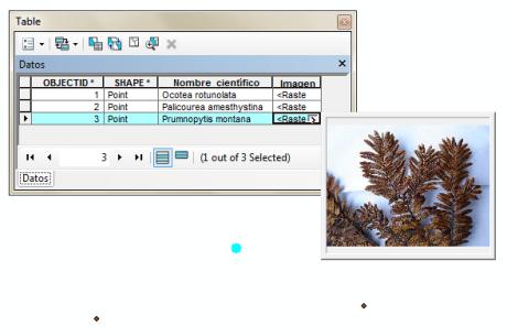 Imágenes en la tabla de atributos en ArcGIS
