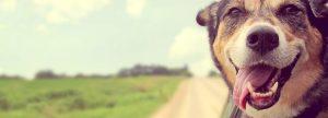 Adoptie honden - A comfort zone for animals