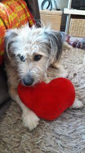 A Comfort Zone For Animals - Geadopteerde honden - Cody