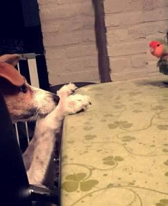 A Comfort Zone For Animals - Geadopteerde honden - Myla
