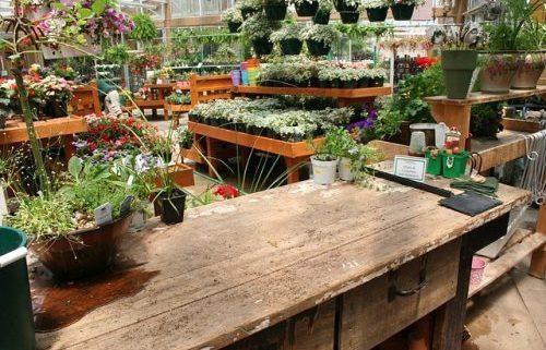 Garden centre, plants, flowers