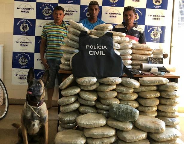 Cão da Polícia Civil localiza 132 kg de maconha enterrados
