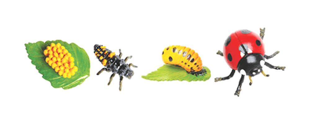 Ladybug Life Cycle Models Set