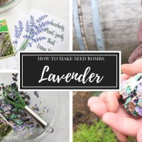 How to Make Lavender Seed Bombs