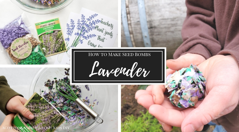 How To Make Lavender Seed Bombs A Cotton Kandi Life