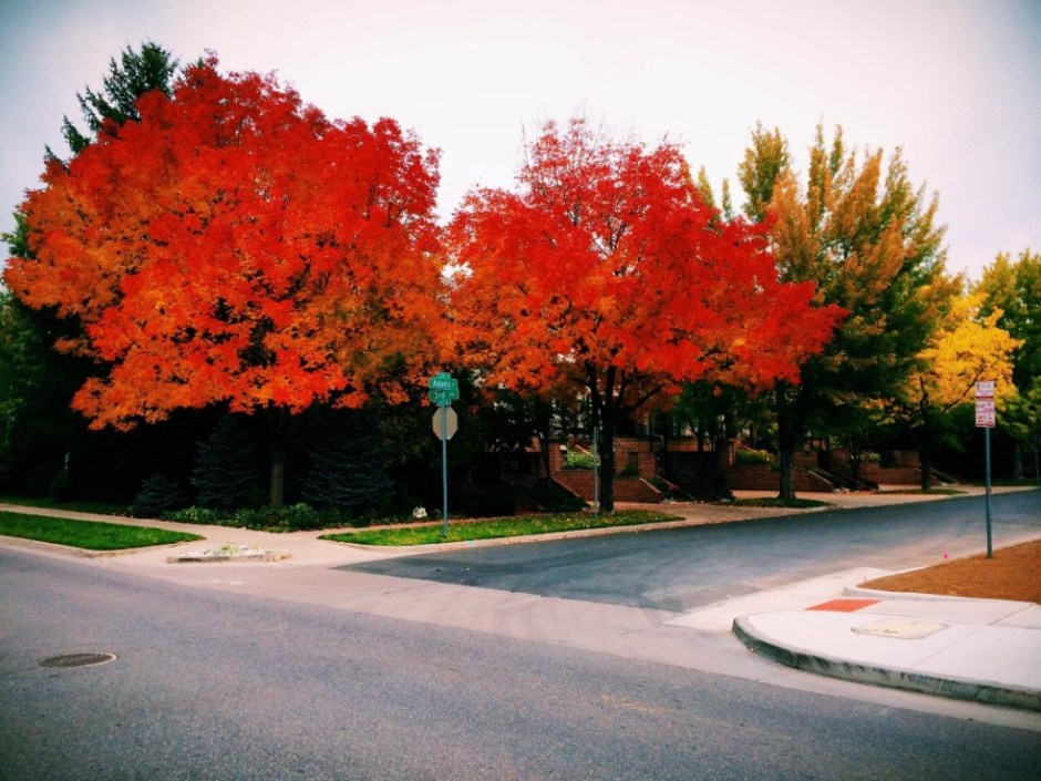 Autumn in Denver