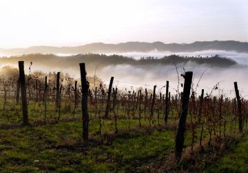 Romagna Wine Focus. Modigliana: la prospettiva del trattorista