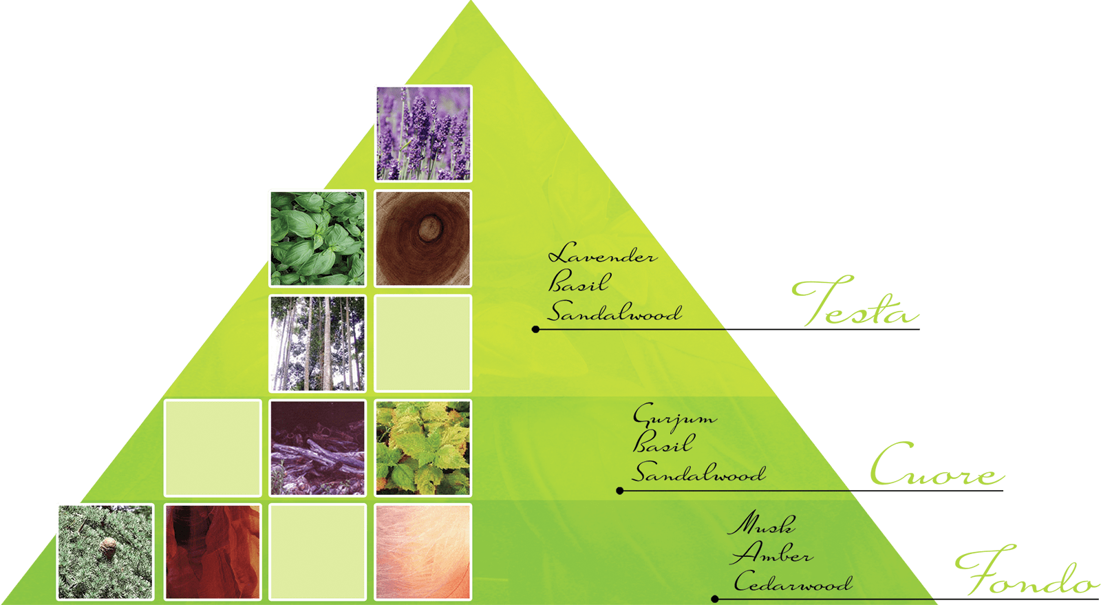 Acqua di Taormina parfums piramide_bacilico Bacilicò - Bacilico