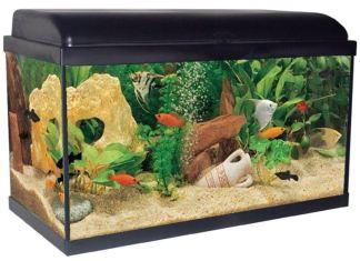 acquario allestire