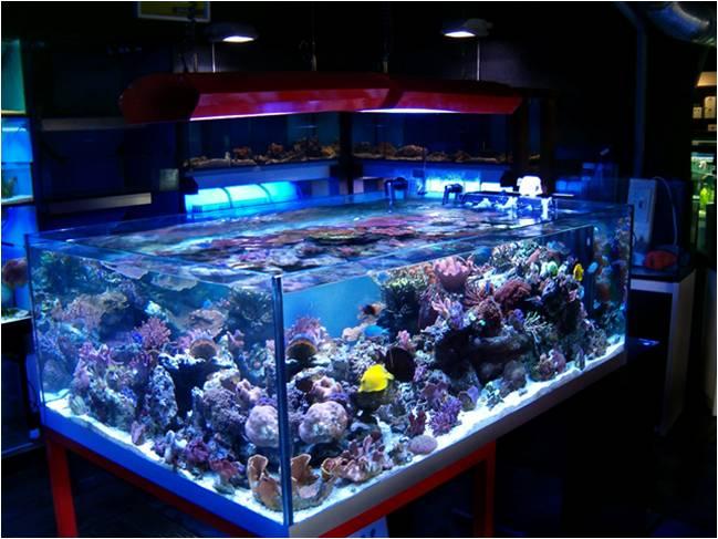 Quante ore di luce servono allacquario? acquario facile