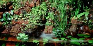 acquaterrario