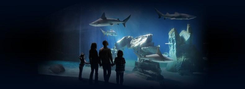 Akvarium v Janově