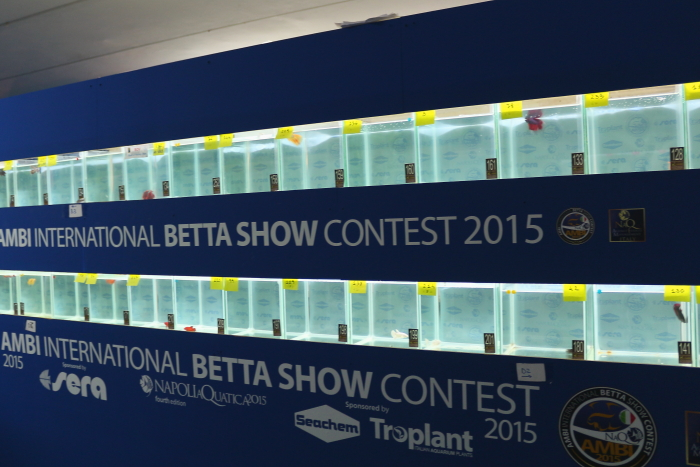 NaQ2015_2_ Betta contest