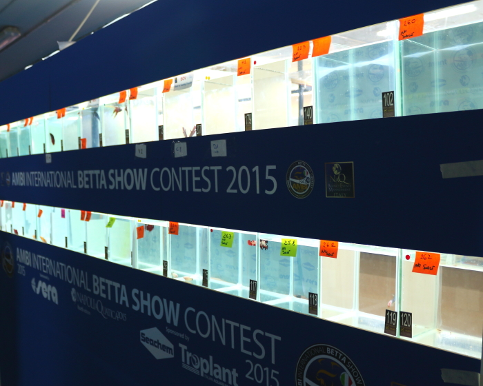 NaQ2015_2_ Betta contest5