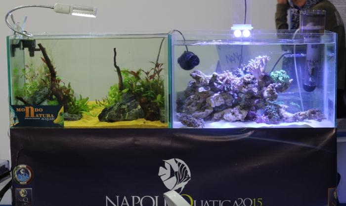 NaQ2015_5