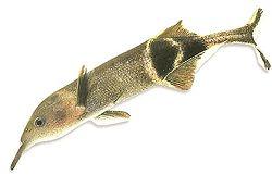 Lo sapevate: l'evoluzione del corpo nel cervello dei pesci…