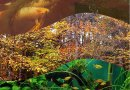 Autunno – guida alla corretta gestione di acquari, caridinai e laghetti