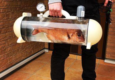 Trasportino per pesci