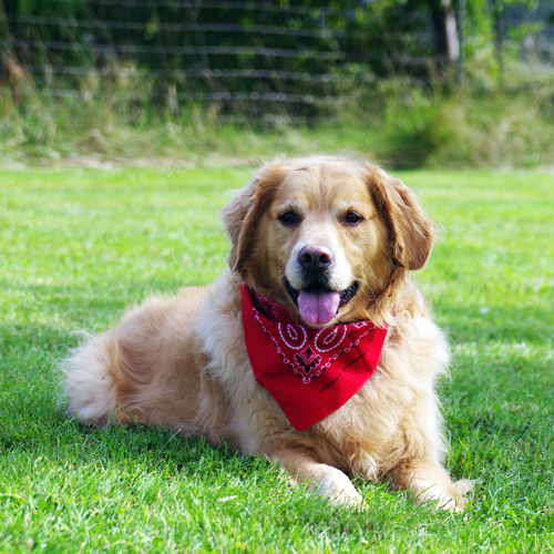 Dog Daycare Reservations