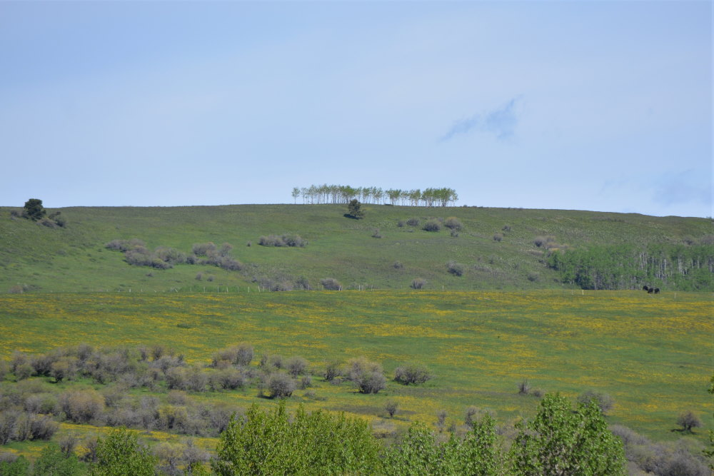 Distant trees on modest hilltop