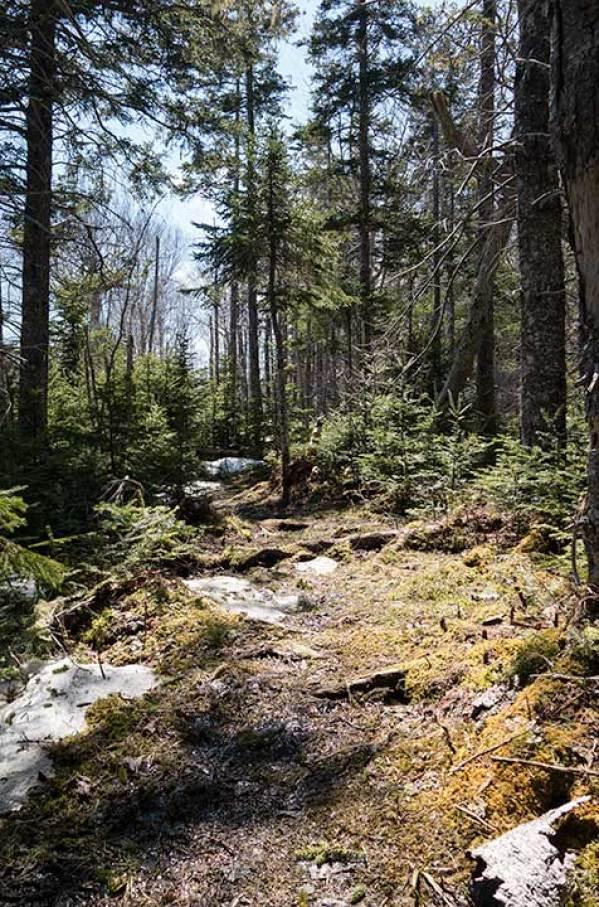 Es ist ein schöner Trail durch einen verwunschenen Wald