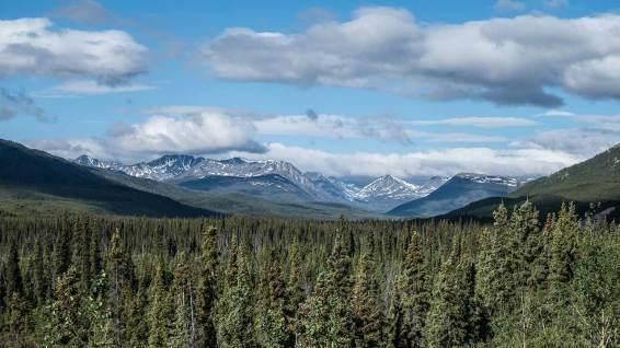 Typische Bergwelt vor Whitehorse.