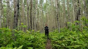 Man sieht den Wald vor lauter Bäume nicht...